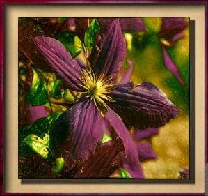 purple clematis painting