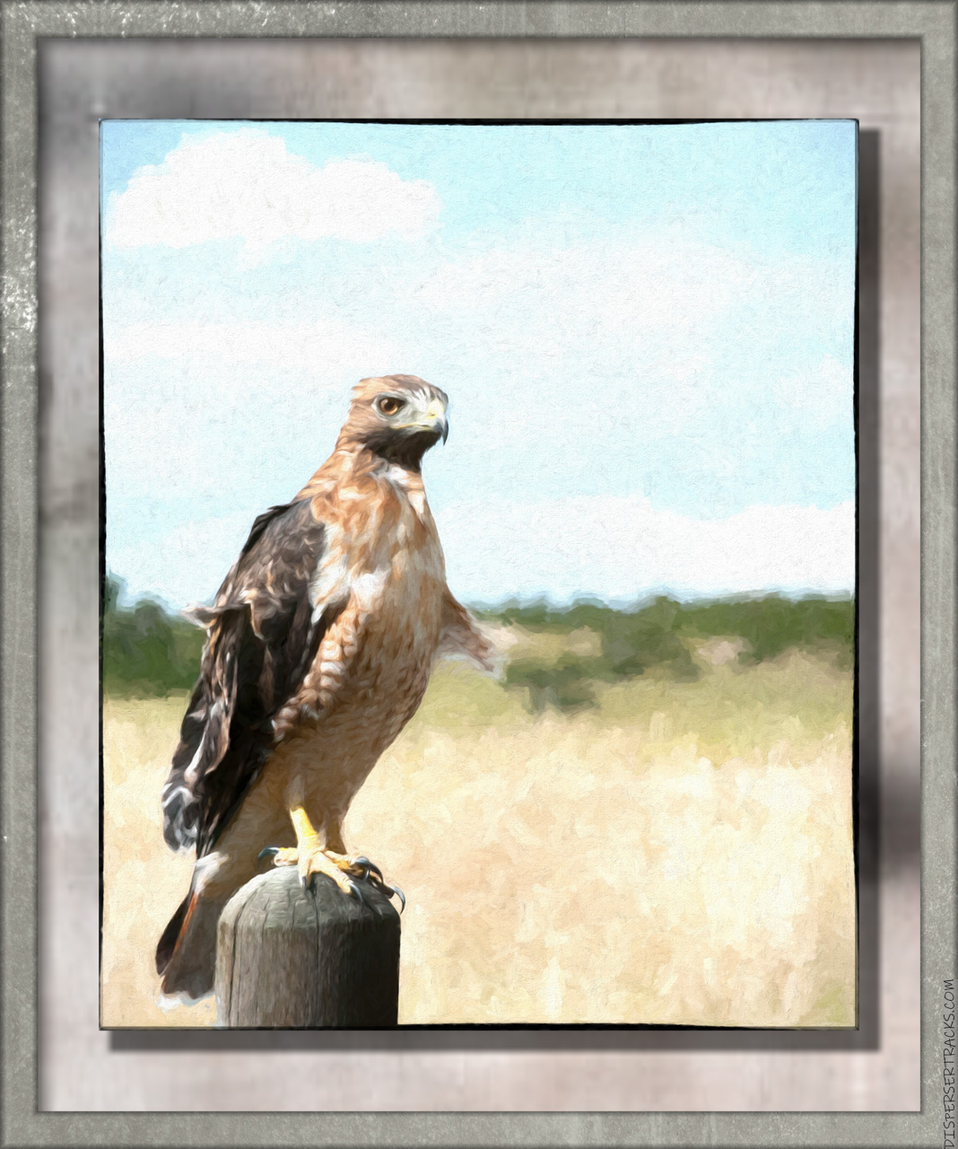 Red-tailed hawk perched on fencepost