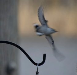 . . . and take off too fast for the camera to get a decent photo.