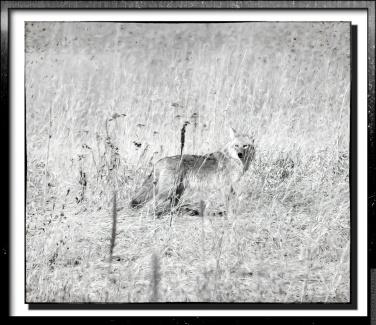 Charcoal monochrome framed