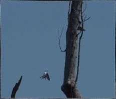 "(first bird) ""In your dreams, buckaroo!"""
